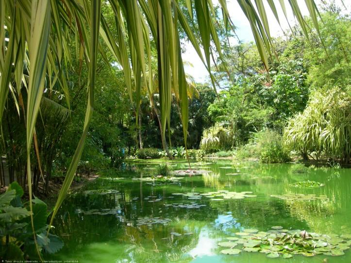 media%2fplaces%2fphotos%2fvacances-jardin-botanique-de-deshaies-100827021724-02